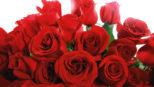 2020 Rose Sale Refunds